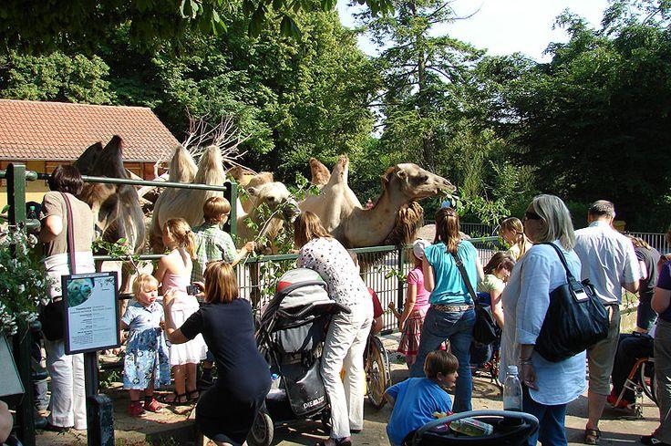 """Heidelberg mit Kindern: Der Heidelberger Zoo mit dem Motto """"Leben Live Erleben"""""""