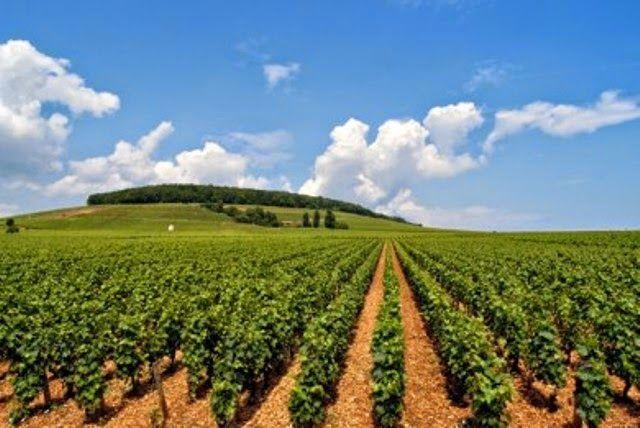 STAKATERGA: Σεμινάρια για νέους αγρότες από τον ΟΓΑ