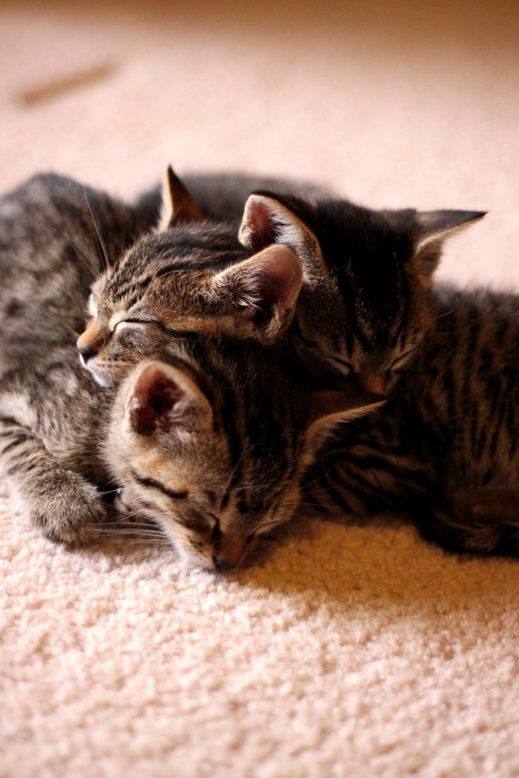"The original caption ""trenza felina"" means ""cat braid."""