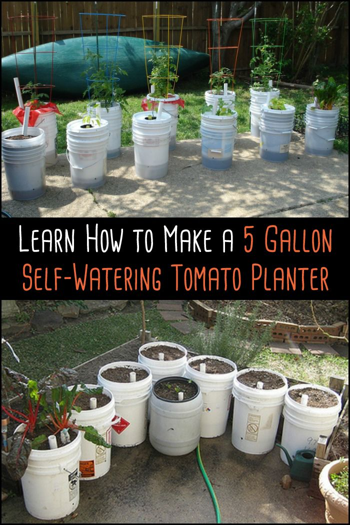 511 Best Container Gardening Ideas Images On Pinterest: Learn How To Make A Self-watering Tomato Planter
