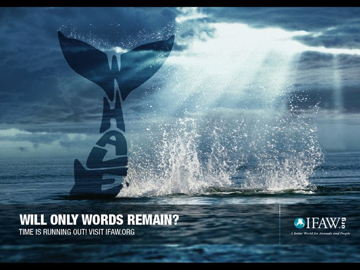 """Will only words remain?"" for the International Fund for Animal Welfare by RAPP."