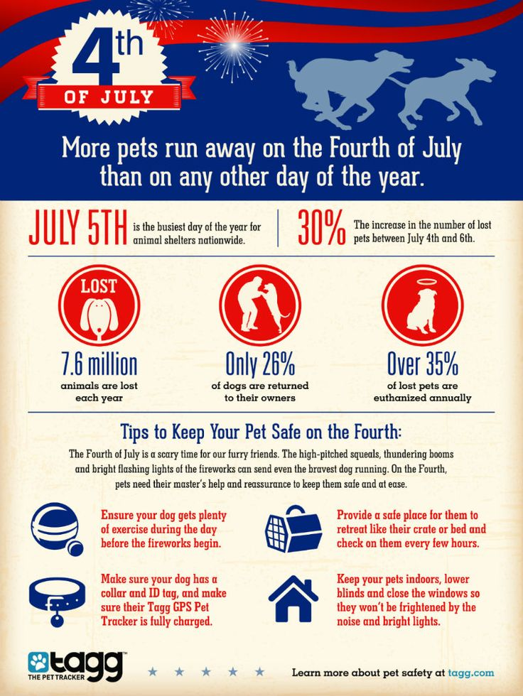 4th of July Safety Tips Infographic Love for Animals