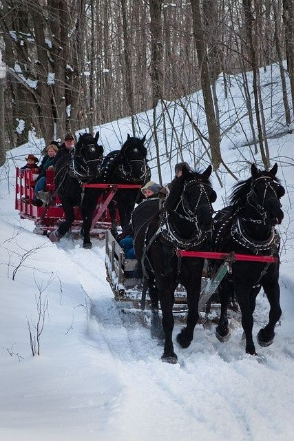 Winter sleigh rides, Black Horse Farm, Traverse City, Michigan