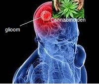 For English and German scroll down please      1. Wetenschap/dier: Nieuwe functie van de CB2-receptor in de hersenen ontdekt  In de hersenen is er een interactie van signaalstoffen en celactiviteit. Wetenschappers van het Research Centrum voor Wetenschappen van de hersenen en het centrum voor neurodegeneratieve ziekten (DZNE) in Berlijn (Duitsland) hebben nu ontdekt dat er een andere belangrijke speler in dit gezelschap is. In een laboratorium-studie ontdekte ze dat de…