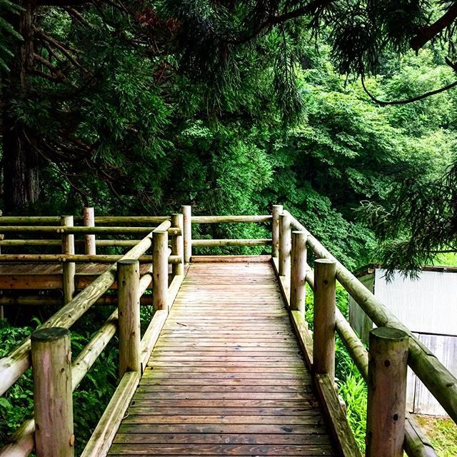 【tsunaandmayo】さんのInstagramをピンしています。 《森の回廊  #森 #木 #回廊 #緑》