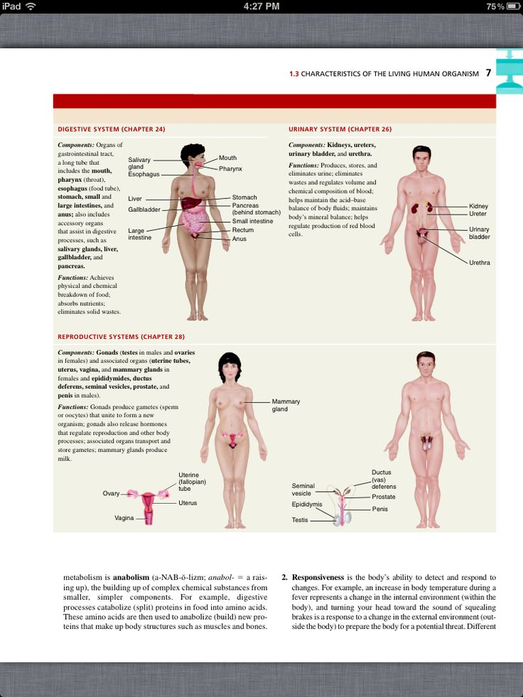The 30 best Chapter 1: Intro to the Human Body images on Pinterest ...