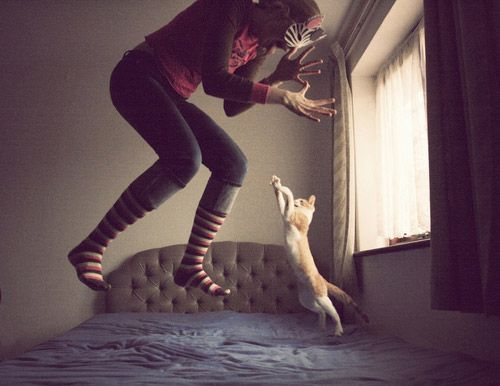 Jumping Cat and Her