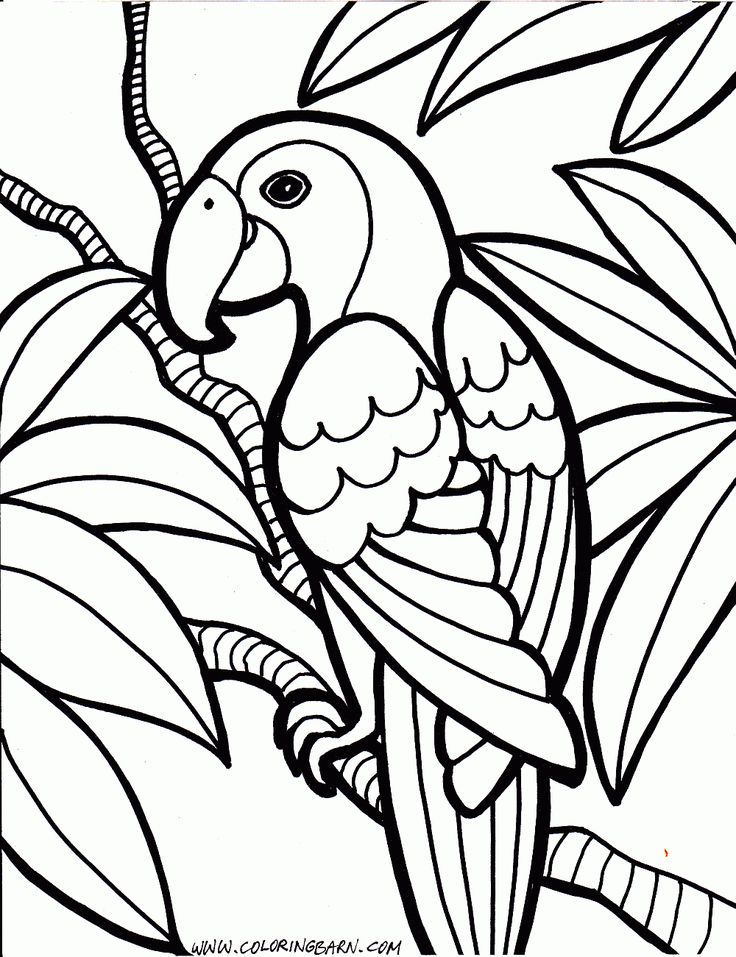 parrot coloring pages bird coloring pagesfree printable - Printable Coloring Pages Birds