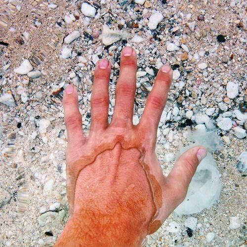 El Lago Flathead, en montana, tiene el agua tan cristalina que casi no tiene diferencia visual cuando pones la mano dentro.
