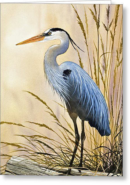 Blue Herons Bright Shore Greeting Card by James Williamson