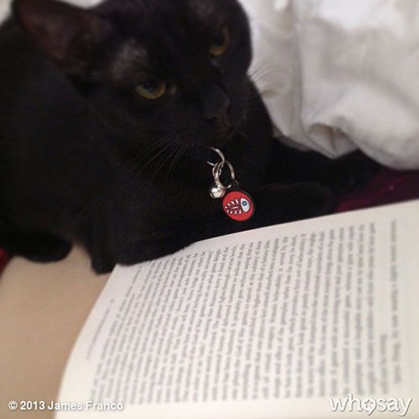 James Franco's cat Lux, reading.http://www.catster.com ...
