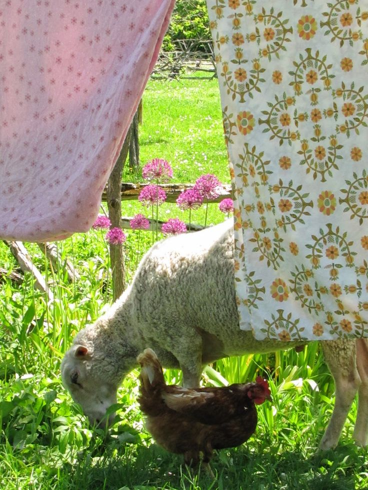 Foraging amid the drying laundry