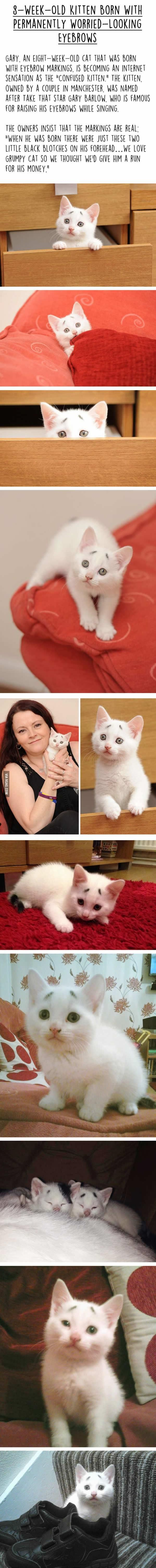 Best Lulu Le Chat Triste Images On Pinterest Tabby Cats - Kitten born with permanently worried looking eyebrows will melt your heart