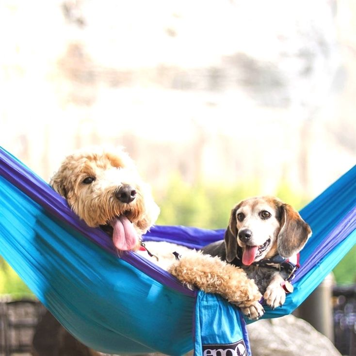 Hammocks Are Best When Shared Pic By Lunathewonderbeagle