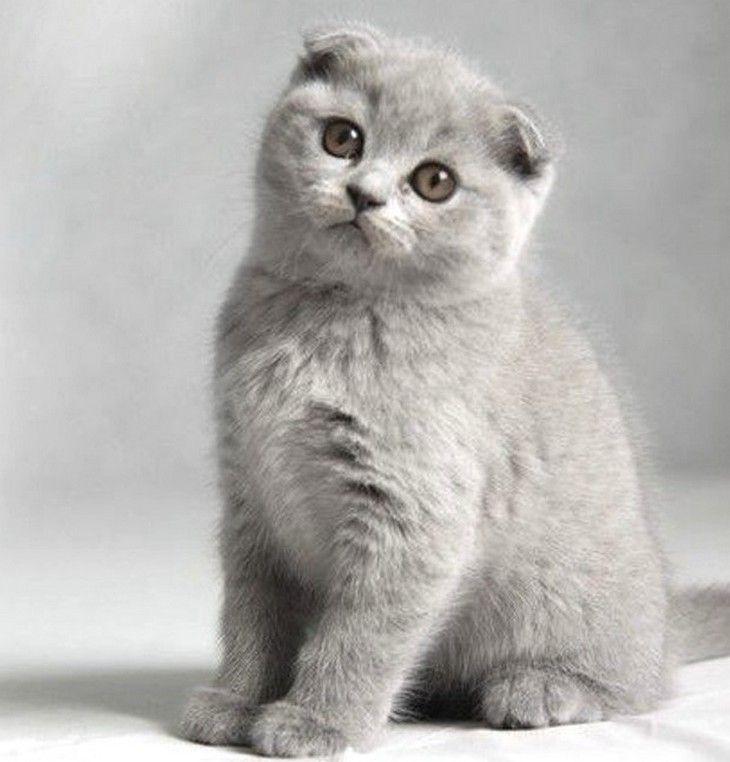 19+dos+gatos+mais+caros+de+qualquer+lugar+do+mundo