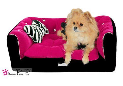 1000 idées sur le thème Chiots Chihuahuas sur Pinterest