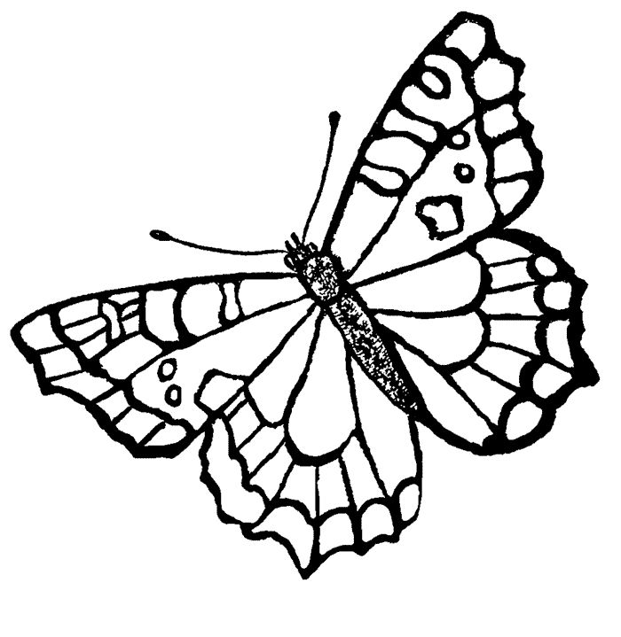 real butterflies coloring pages - photo#4