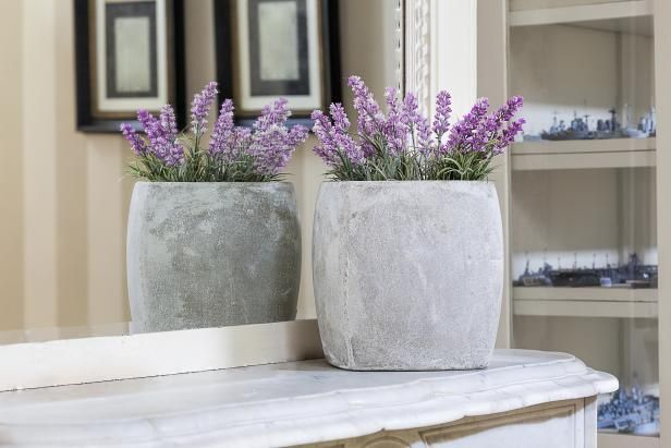 How to Grow Lavender Indoors by hgtv #Houseplants #Fragrant