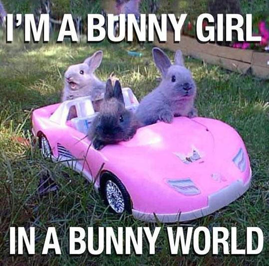 """I can hear the bunny in the back with that super deep voice """"Life in plastic, is fantastic"""""""