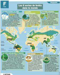 Les 6 sortes de forêts dans le monde
