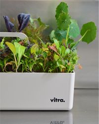 Kitchen Garden: I thought you might like to see this herb garden I made in a Vitra toolbox (by designer Arik Levy)...[design blog]