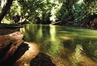 Kalimantan rainforest. Keep it safe and...Banish all the destroyers from earth!