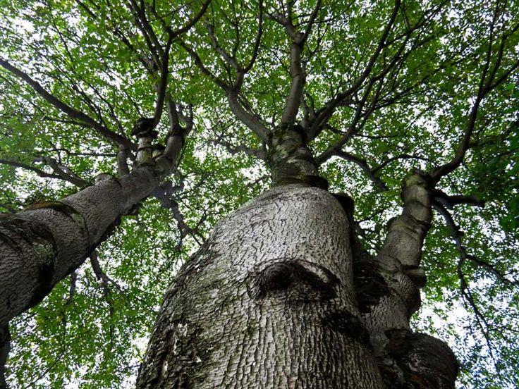 17. Si te ubicas cerca de un árbol, esta sería la vista.