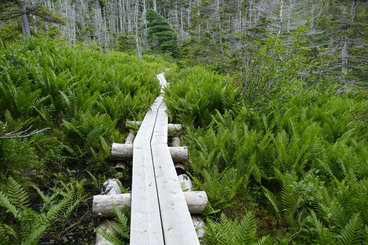 La Manche Provincial Park on Newfoundland's East Coast Trail.