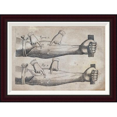 Global Gallery Discovery of The Circulation of Blood by William Harvey Framed Graphic Art Size: