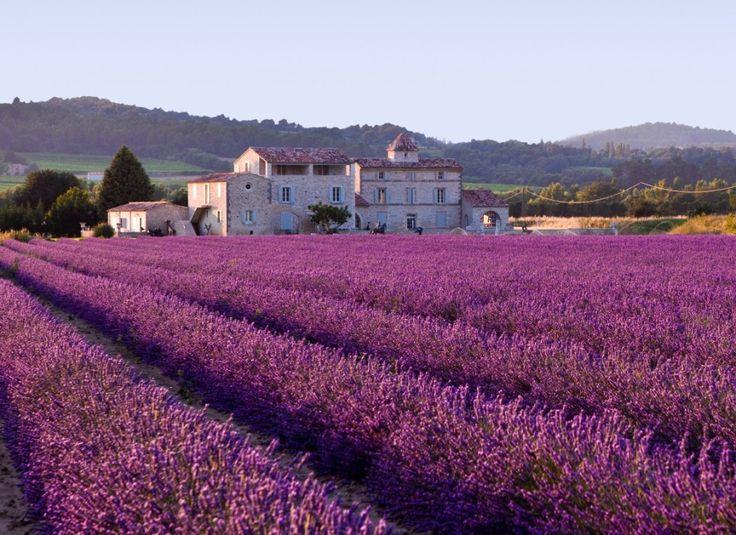 Les champs de lavande, Provence, France La lavande est cultivée en Provence depuis le 14 ème siècle, dessinant des chemins violets à travers les champs dès la fin du printemps.