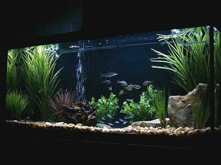 17 best images about 55 gallon fish tank remodel on for Freshwater fish tank setup