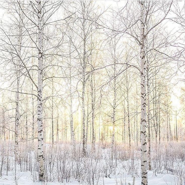 """3,095 gilla-markeringar, 23 kommentarer - Sweden - Sverige 🇸🇪 (@sweden) på Instagram: """"Nice shot by @deskriptiv - """"The sun is never as beautiful and rewarding as it is during the winter…"""""""