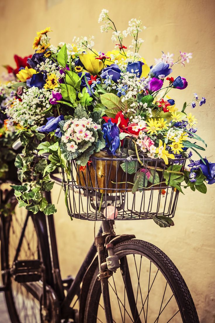 Vintage bike, with gorgeous flora x
