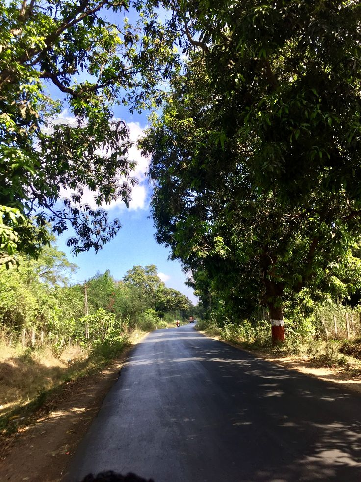 Blue sky and shade of lush green trees amidst the route