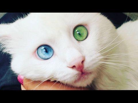 ПРИКОЛЫ С КОТАМИ СМЕШНЫЕ КОТЫ    ТОПовая ПОДБОРКА смешные кошки funny cats котик котенок с котами -  #animals #animal #pet #cat #cats #cute #pets #animales #tagsforlikes #catlover #funnycats ПРИКОЛЫ С КОТАМИ СМЕШНЫЕ КОТЫ ТОПовая ПОДБОРКА коты приколы с котами смешные коты кот смешные кошки funny cats котик котено