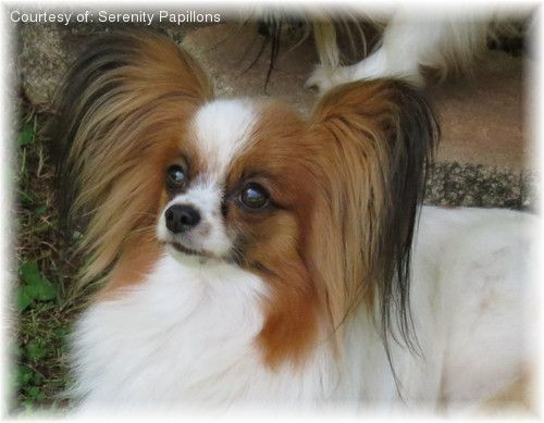 Papillon Picture All Things Butterfly And Papillon Pinterest