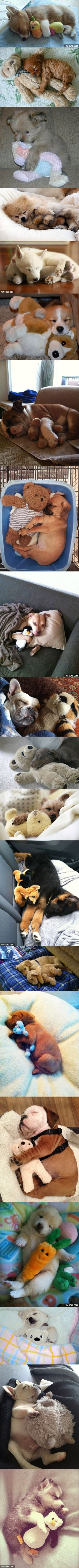If you're having a bad day. Just look at 20 Puppies Cuddling With Their Stuffed Animals During Nap Time