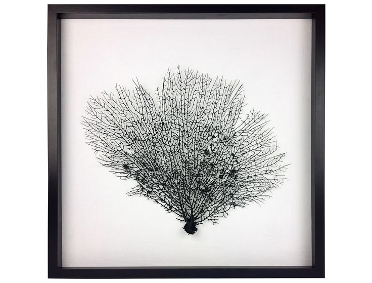 Framed Sea Fan:  Whether your goal is coastal chic, organic texture, or just intriguing design, delicate framed sea fans are the perfect choice.