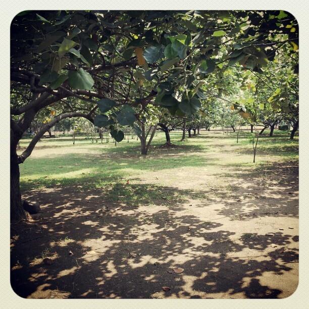 park at Ancol, Jakarta