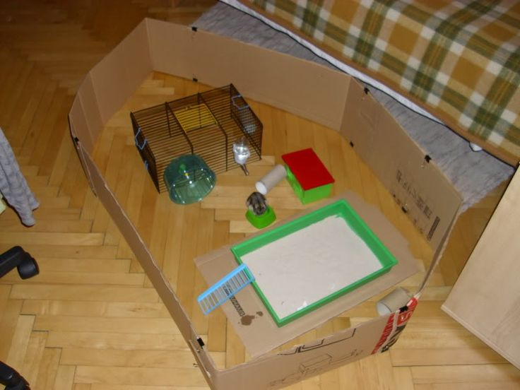 Cat Proof Hamster Home Ideas