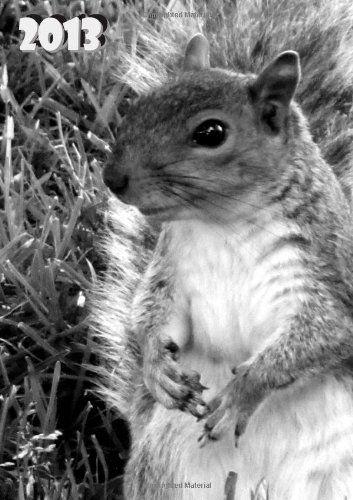 Kalender 2013 - Eichhörnchen: DIN A5, 1 Woche auf 2 Seiten + 2 Seiten Jahresübersicht + Ferienübersicht + Platz für Adressen und Notizen (German Edition)  #Book