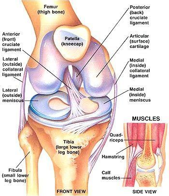 Preventing ACL Injury through Strengthening Exercises   The Anterior Cruciate Ligament is extremely important to all, as this ligament contr...