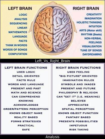 right brain left brain We are seller right brain/left brain on amazon, and mainbrain on ebay to find out more about us, click on any of the other navigational links at the top of the page buy with confidence.