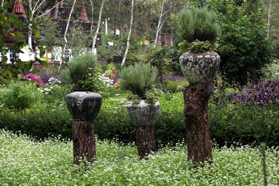 Rosemary pots & Buckwheat flowers Container garden / Farm Herbnara / Korea