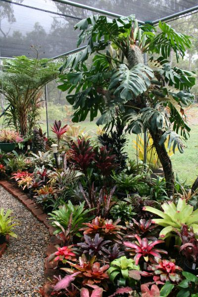 The International Cordyline Society