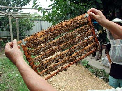 panal de abeja