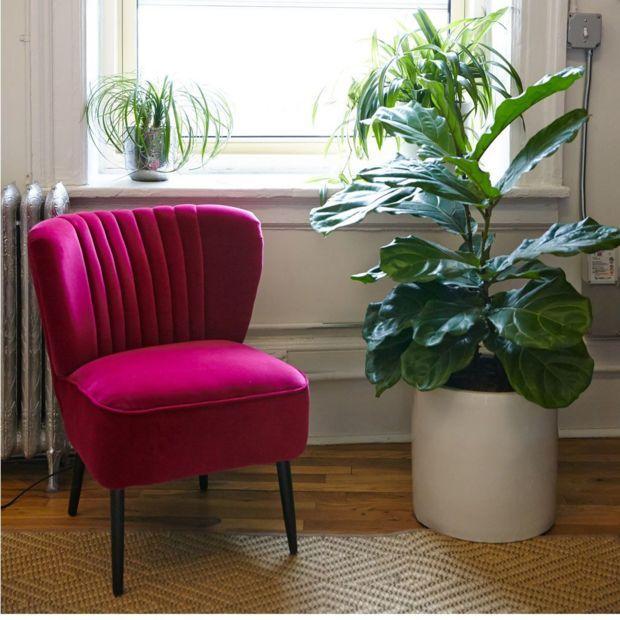 17 best images about office plants desk mates on pinterest the office office plants and plants - The best office plants ...