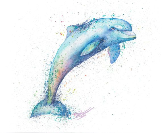 Rainbow Dolphin in watercolour, part of the 'Tropical Waters' range by Stephanie Elizabeth Artwork.