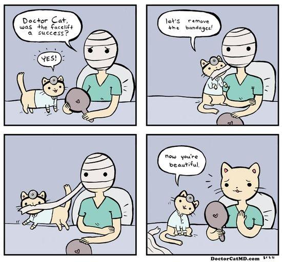 Cat Plastic Surgery