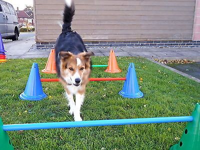 Dog agility supply